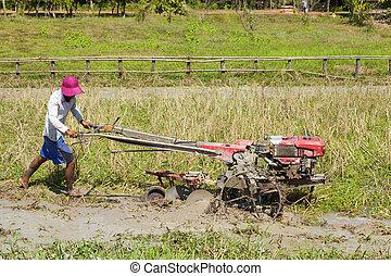 Cambodian farmer is plowing rice field near Banteay Srey...