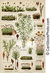 """Mosses - an illustration to article """"Mosses"""" of the..."""