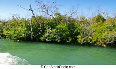Cancun Mayan riviera with mangrove view in a moving boat in...