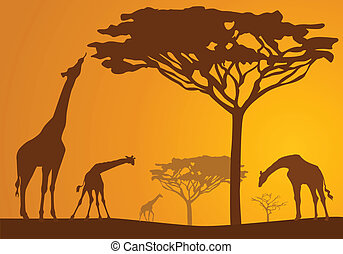 Safari 8 - Silhouettes of giraffes on backgrounds...