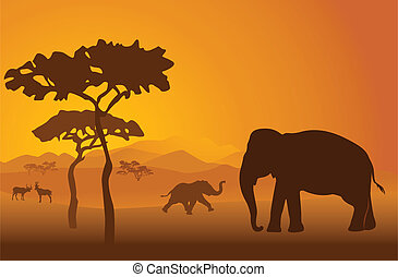 Safari 9 - Silhouettes of elephant in national park in...