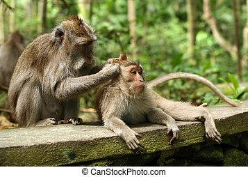 家庭, 猴子