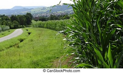 corn field with panoramic view