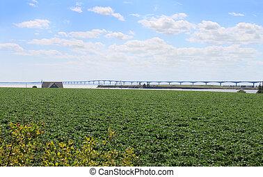 Potato field and bridge