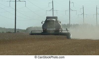 working harvesting combine in the field of ripe wheat