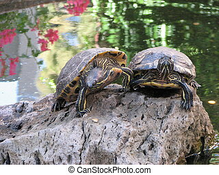 Two Turtles touching each other