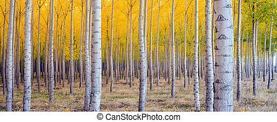 Beautiful Trees - A stand of trees begins to weather the...