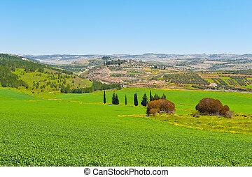 Israel Landscape - Green Field in Israel, Spring