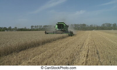 harvesting combine in the summer field of wheat