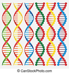 Molecules of DNA.
