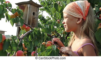 Girl and a apricots - Girl rips off the branches and eat...