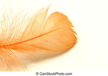 Feather isolated