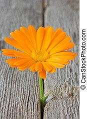 flower growing in old wood floor