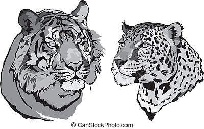 Vector - tiger