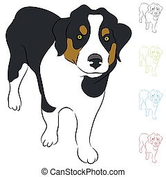 Border Collie Puppy - An image of a Border Collie puppy.