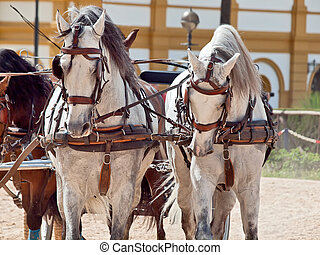 beautiful breed carriage horses in Andalusia, Spain. cloudy...