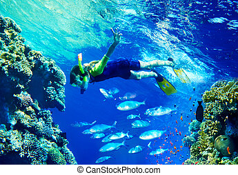 Child diver with group coral fish. - Child diver under water...