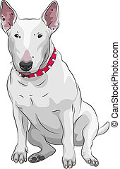 vector cartoon Bull Terrier Dog breed sittong - color sketch...