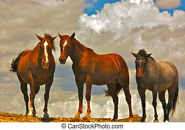 Three Horses on a mesa in Utah - A third horse appeared as...