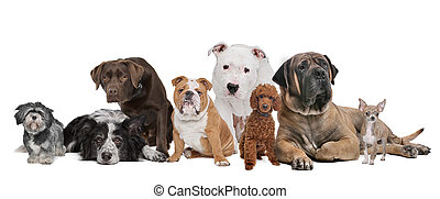 Group of eight dogs sitting in front of a white background