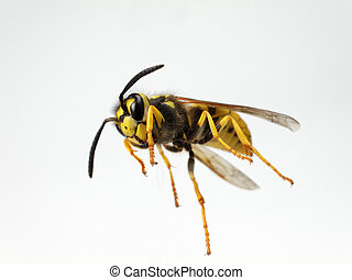 wasp - Shot of a wasp from below.