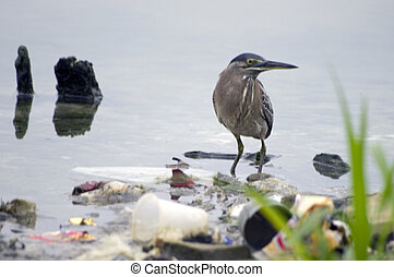 Bird in Polluted Lake fill with Rubbish