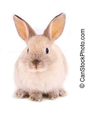 A rabbit isolated against white background