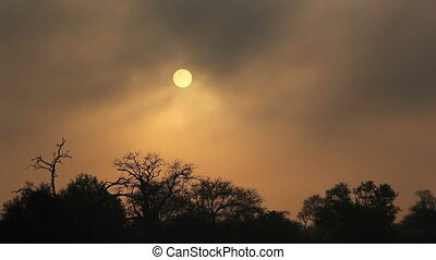 Drifting mist at sunrise with tree silhouettes, Sabie-Sand...