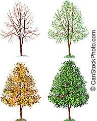 Tree - Vector illustration - tree,  four seasons