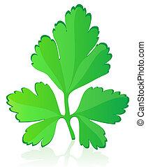 parsley illustration isolated on white background