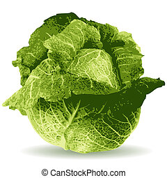 cabbage illustration isolated on white background