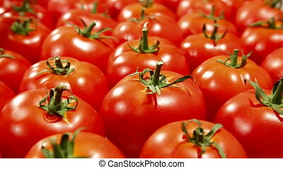 DOLLY: Fresh Tomato Background - Fresh Red Tomato Background...