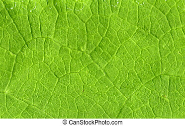Leaf veins close up, high resolution, natural as it is
