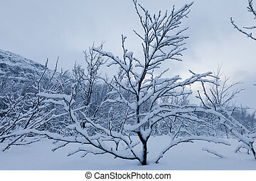 Snowy trees  - A high resolution image of Snowy trees