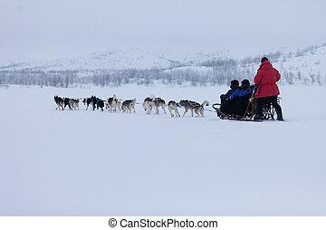 Husky dogs - A high resolution image of husky dogs racing