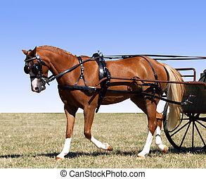 Carriage Pony