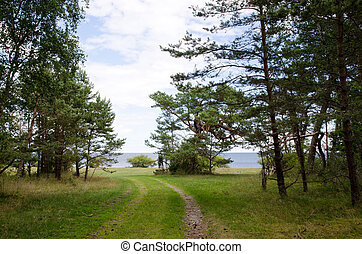 Road to the beach at a forest of pine trees