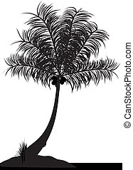 coconut tree - a single coconut tree on a white background