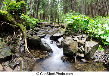 forest - Cascades on a clear creek in a forest