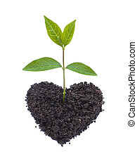 Eco love - A high resolution image of a small plant growing...