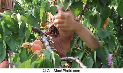 Girl regales apricot - The child tears the branches and eat...