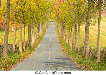 Tree lined road - tree lined road in Denmark