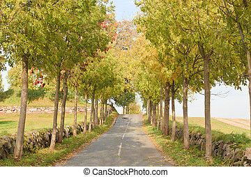 Tree lined road - tree lined country road in Denamrk
