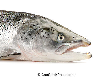 Salmon isolated on a white