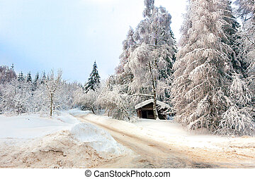 Winter in the german Harz - White Winter forest in the...
