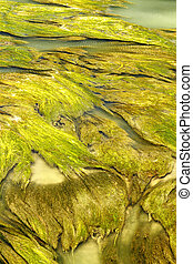 aquatic vegetation abstraction