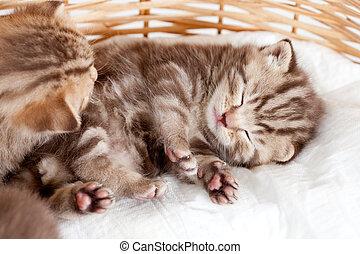 funny sleeping baby cat kitten in wicker basket - funny...