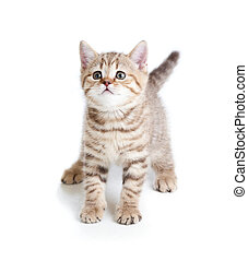 funny baby cat kitten on white background