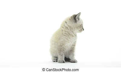 Cute kitten on white