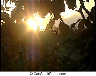 SUN through leaves ms2